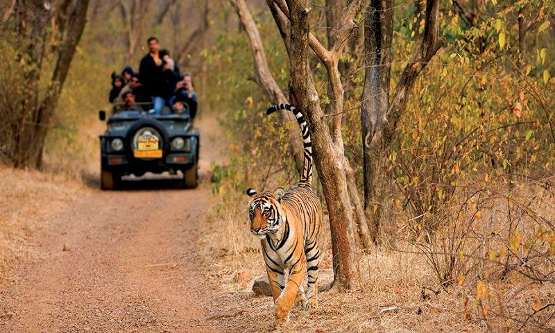 Ranthambore National Park , Ranthambore in Rajasthan