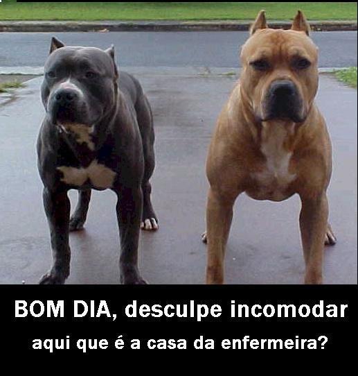 Enfermeira agride cão em Goiás e gera revolta nas redes sociais