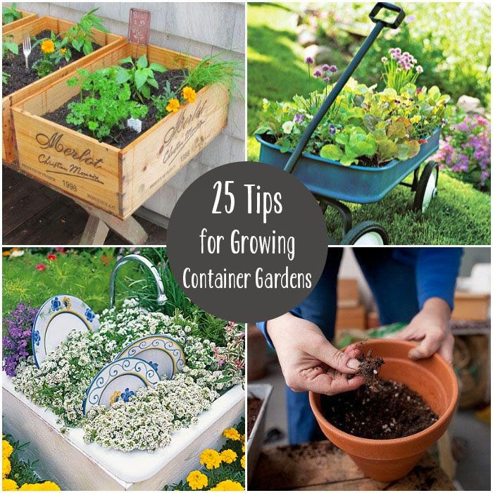 25 tips for growing container gardens for Organic container gardening