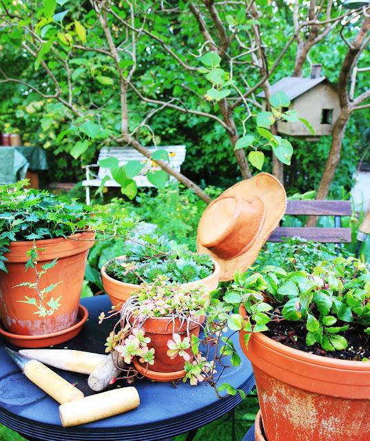 inspiration trädgård