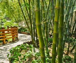 Terapkan Filosofi Pohon Bambu agar Sukses jadi Pengusaha