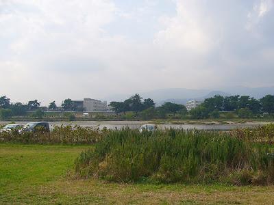 武庫川「髭の渡し」コスモス園