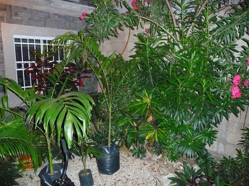 Jard n peque o patio con sendero de adoqu n el ave f nix proyectos zen ambient - Jardines con adoquin ...