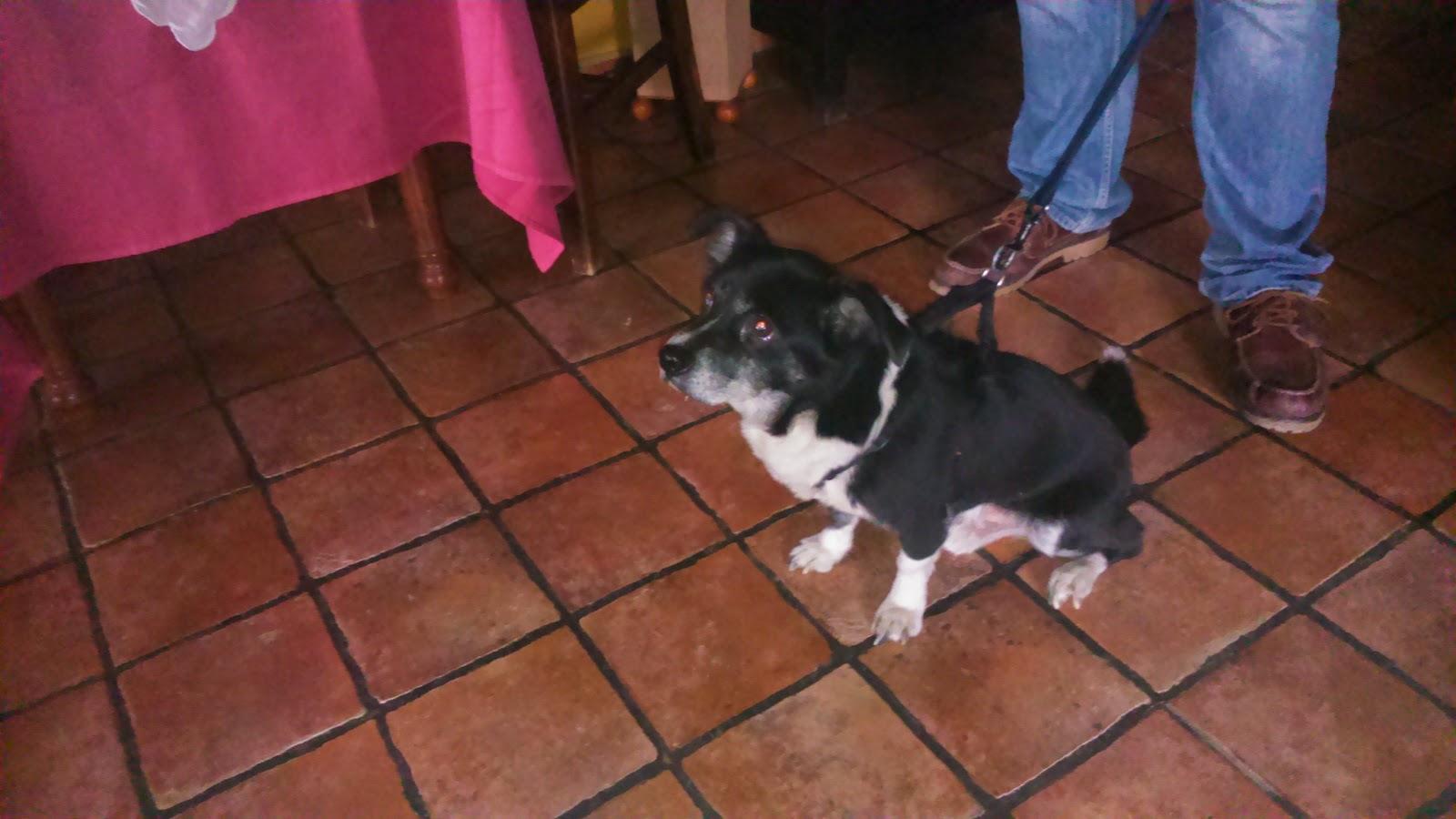 Mascotas en Hospedería Ballesteros