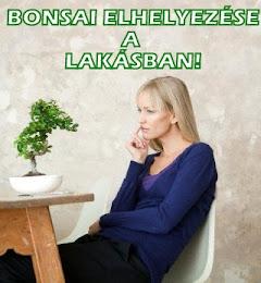 BONSAI A LAKÁSBAN - KATT A KÉPRE!