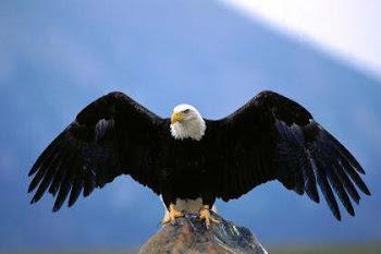 .. pero los que esperan en Jehová tendrán nuevas fuerzas; levantarán alas como las águilas;