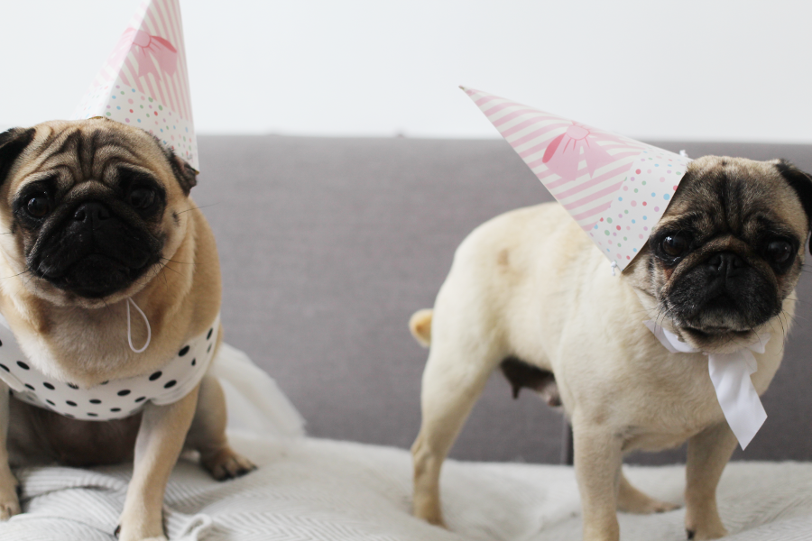 UK blogger, Pug party, pug birthday party, UK Pug