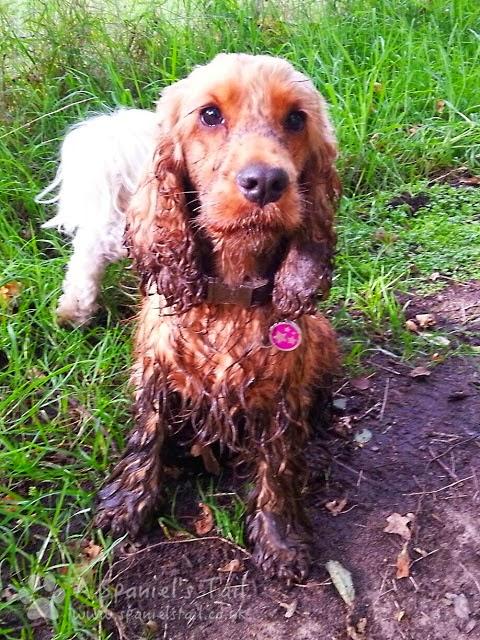 Spaniels Tail Prroduct Review Precious Pets London Shampoo Eau de Toilette