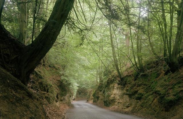 Sunken lane approximately 850 m. SSE of Tillington Church. Sunken lane in Lower Greensand sandstones.