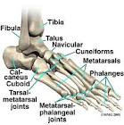 anatomi tulang kaki