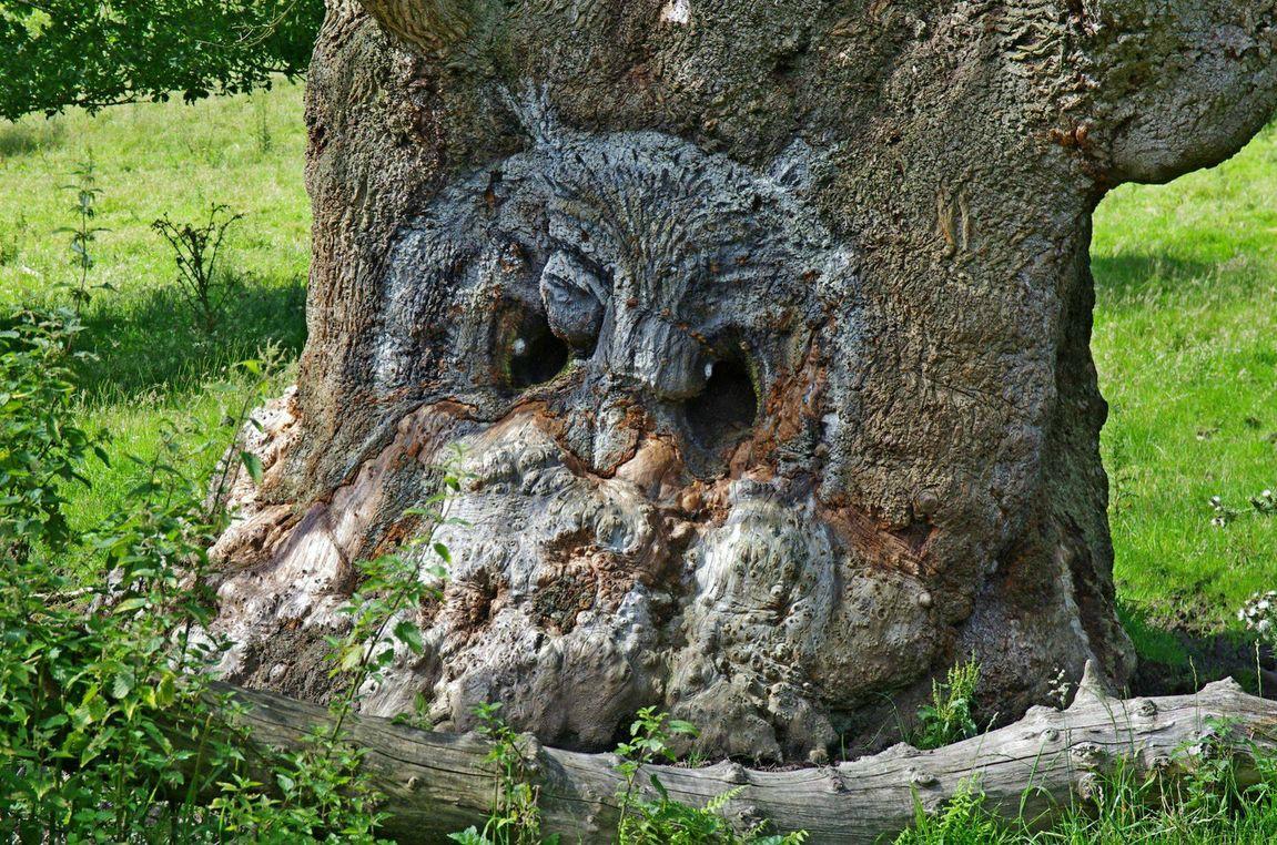 Owl+pareidolia.jpg