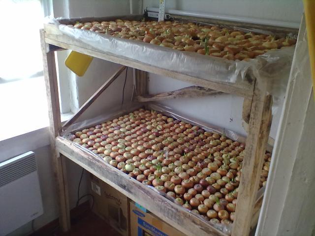 Как сделать стеллаж для выращивания лука