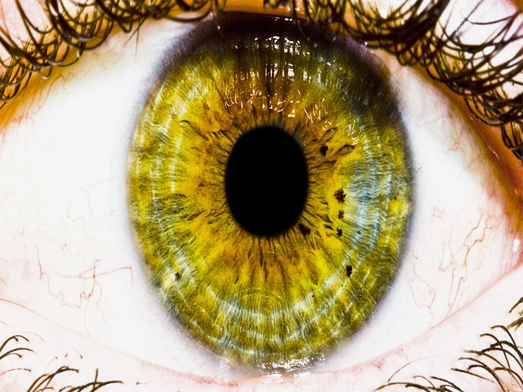 http://2.bp.blogspot.com/-kXjSlFW7USE/T-A3b-deZ1I/AAAAAAAACCE/KTfN-m53I3g/s1600/Stunning-Animated-Wallpaper.jpg