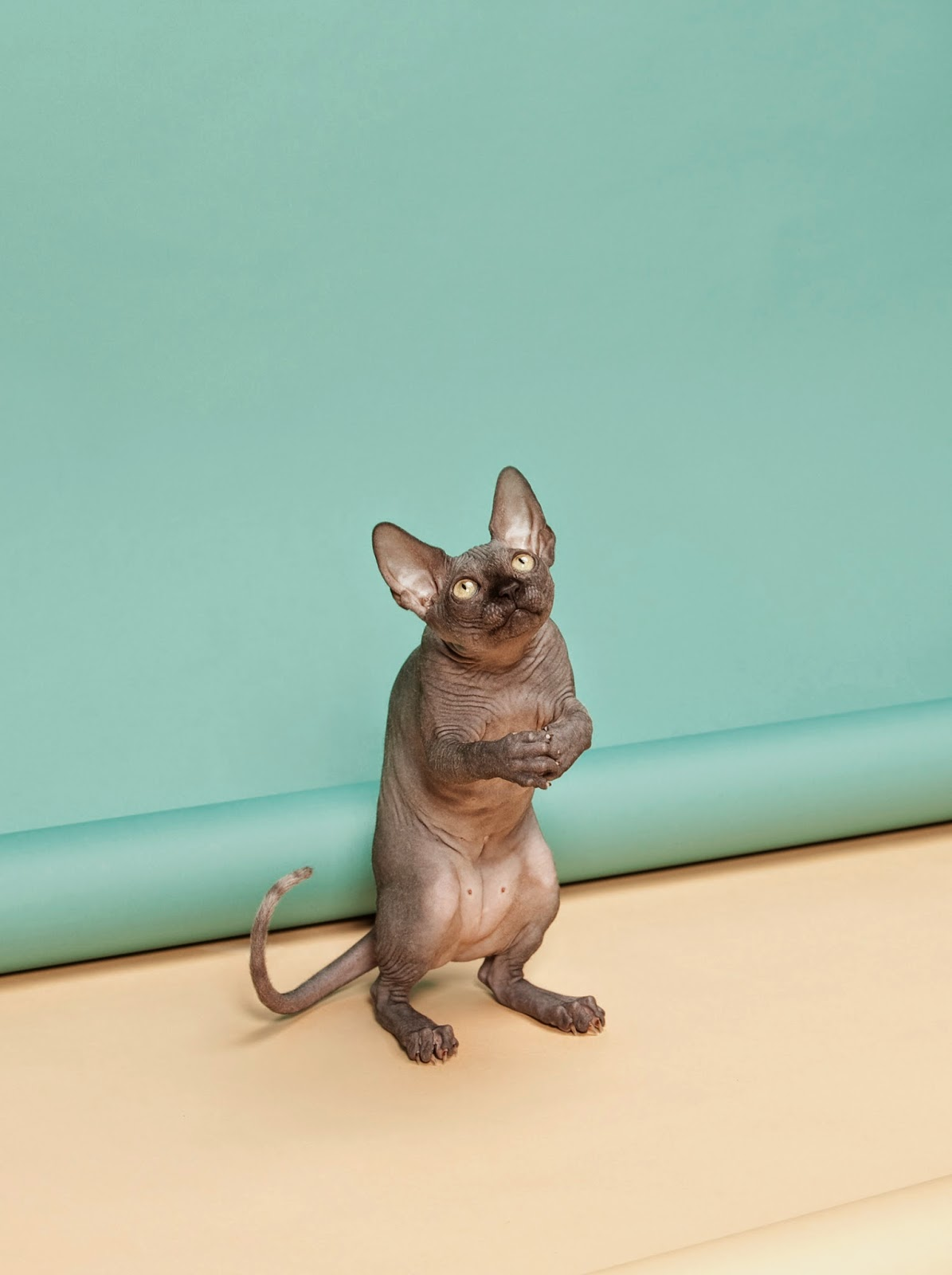 Copyright: (c) Kimmo Metsaranta, Finland, Shortlist, Still Life, Professional Competition, 2015 Sony World Photography Awards. Series Name: Animal Behaviour