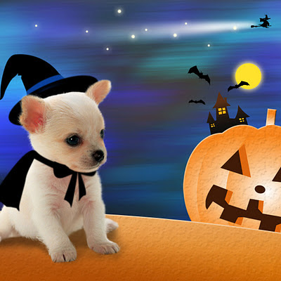 Little dog like a witch, Halloween download free wallpapers for Apple iPad