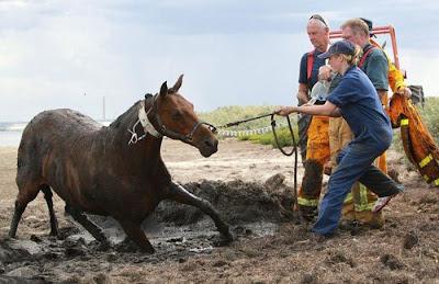 Resgate Cavalo 10 - Clique na imagem para ampliar