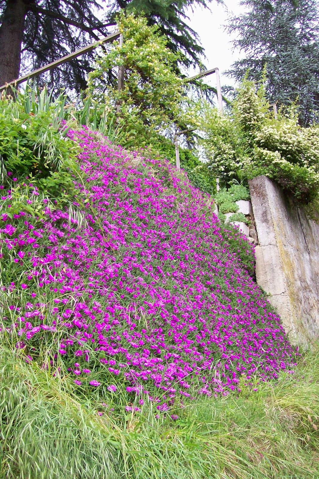 Ultimissime dall'orto: Muro fiorito