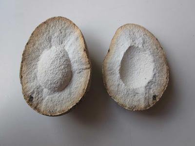 Authentic Prehistoric Hadrosaur Dinosaur Fossil Egg Geniune