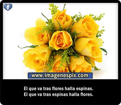 Imagenes bonitas con frases lindas para amor - YouTube