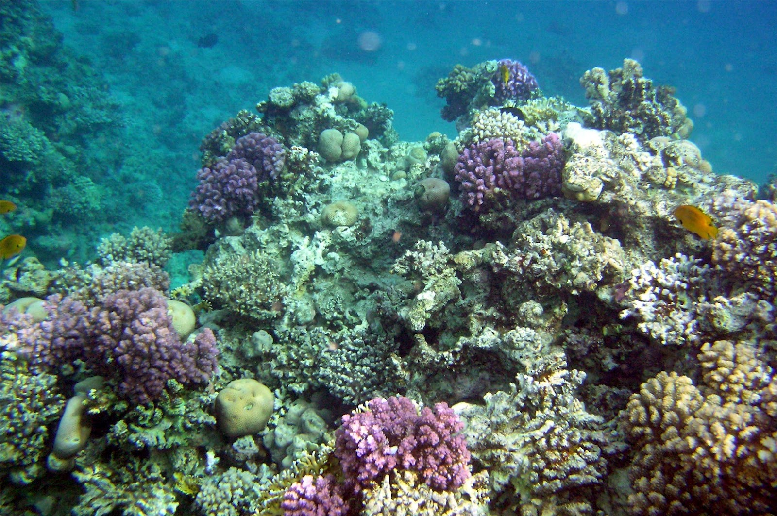Coral Reef wallpapers | christianhdwallpaper