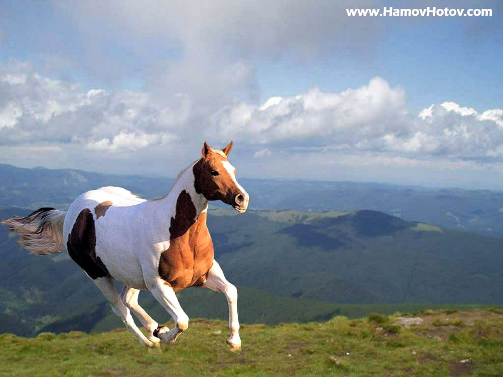 Download   Wallpaper Horse Country - Running%2BHorse%2B%25281%2529  Snapshot_8310098.jpg