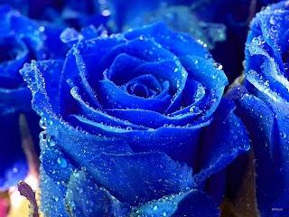biru itu elegan elit