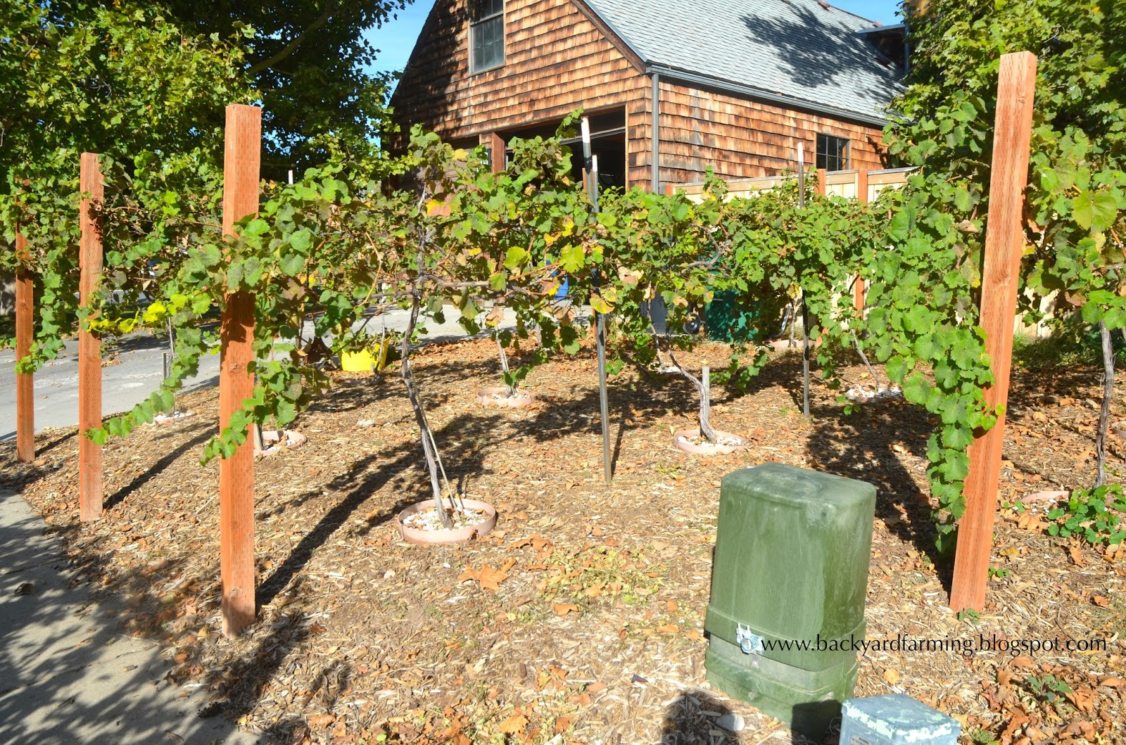 small backyard vineyard - 28 images - small backyard