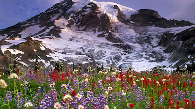 Flowers Ice Mountains Full HD Nature Background Wallpaper for Laptop Widescreen