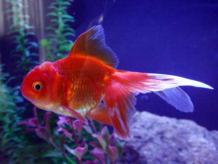 Top 10 most popular best pets in the world top things for Best fish to have as pets