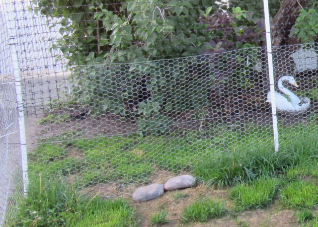 cat fence made from pvc pipe fencing materials. Black Bedroom Furniture Sets. Home Design Ideas