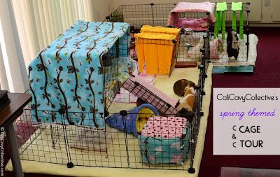 cavy C&C cage setup