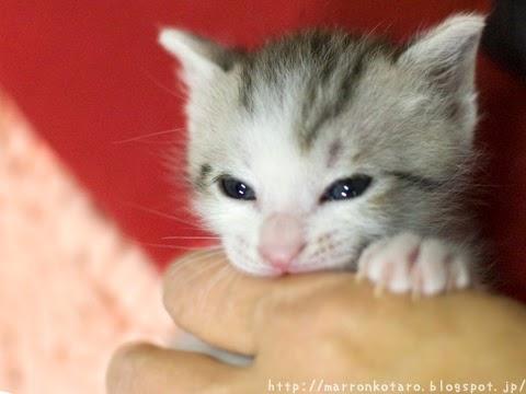 指に噛み付く子猫