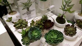 グリーンパーク観葉植物