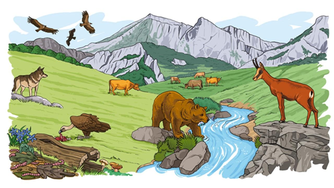 Resultado de imagen para imagenes de los seres vivos y su entorno