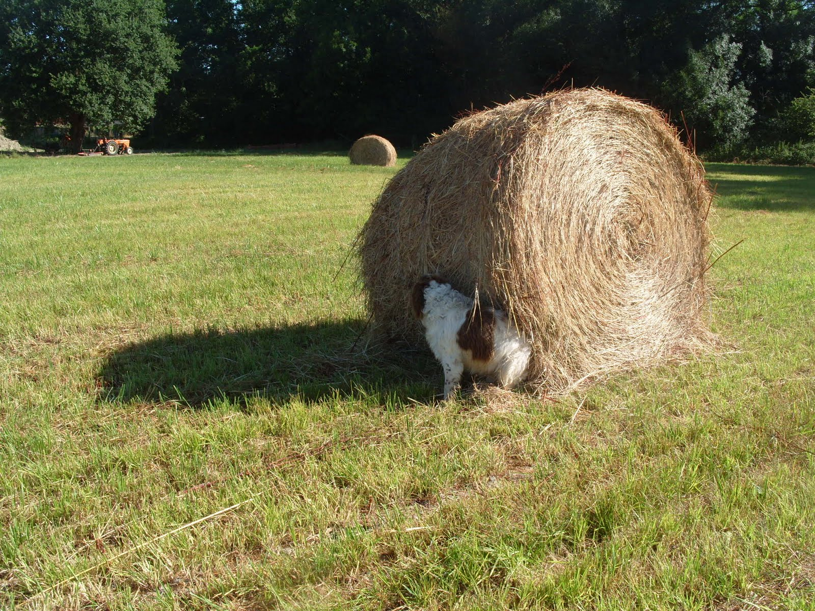 how to make hay bales by hand
