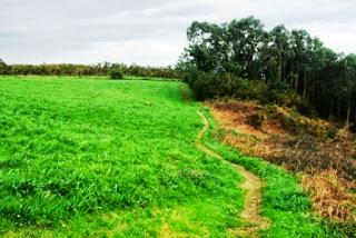 Vista de la senda que desde Barayo nos conduce a Frejulfe