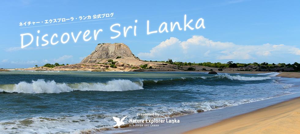 ネイチャー・エクスプローラ ブログ | Nature Explorer Lanka