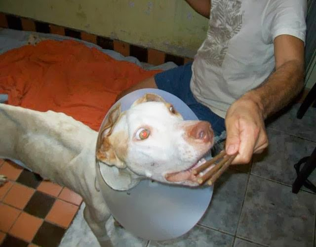 Amazing dog rescue (35 pics), dog rescue story, amazing dog recovery