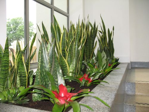 Stewarts office plants too cool for school - Cool office plants ...