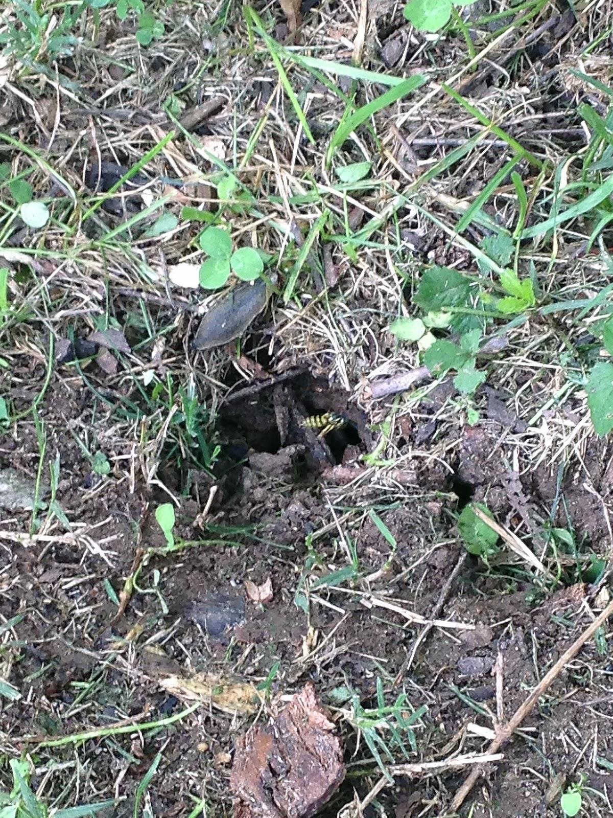 NC Outdoor Ramblings: August 2012
