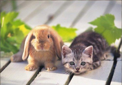 bunnies and kittens. unnies and kittens. kittens