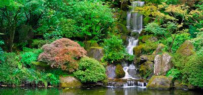 Cascadas de agua clara en el río del boque