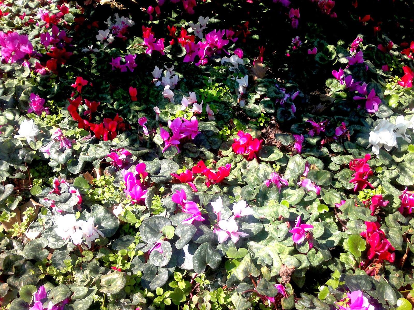Dallar bahar çiçekleri ile süslenmişken