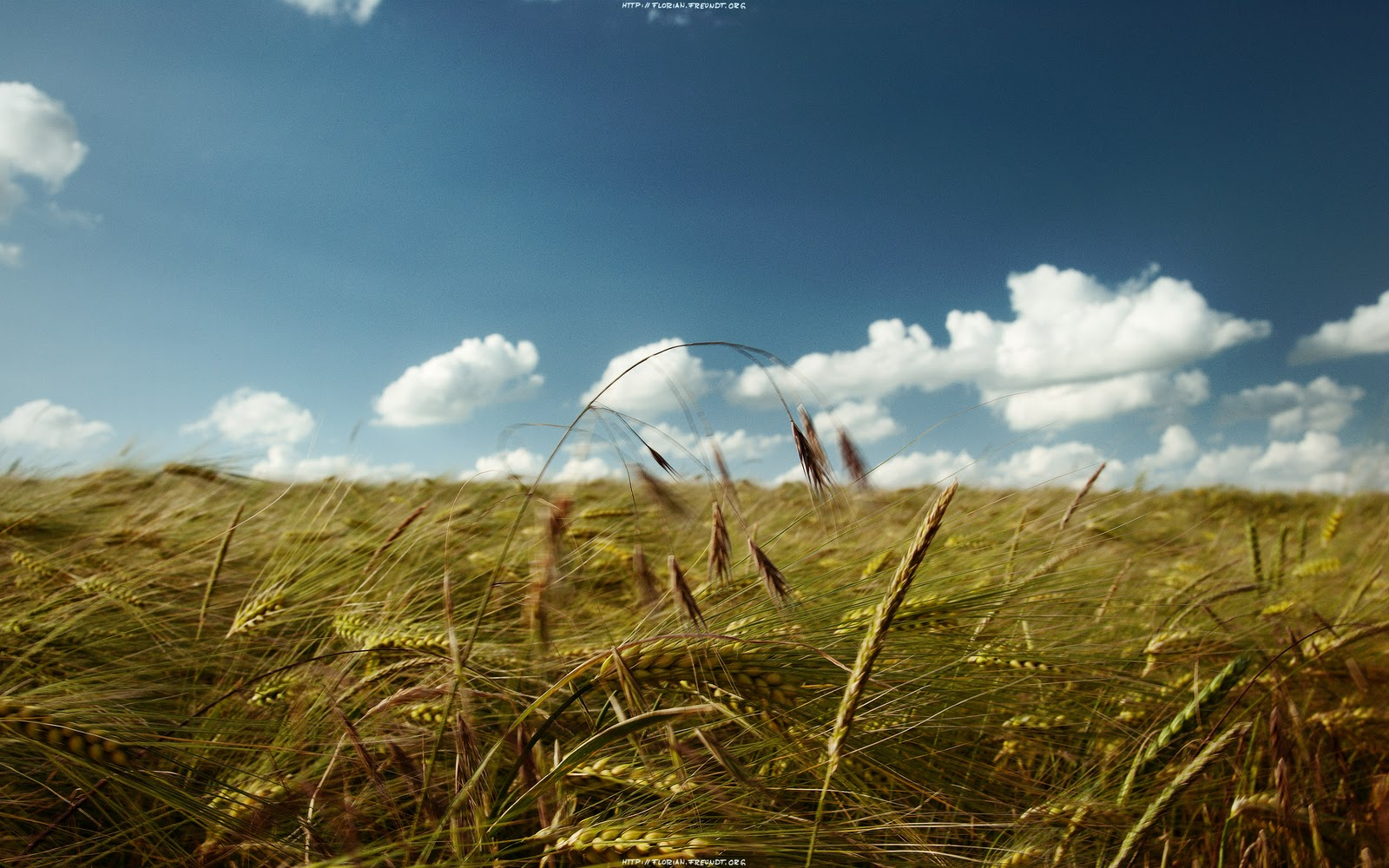 http://2.bp.blogspot.com/-kaiN1UR5cZY/Tuy-UDK5EnI/AAAAAAAAAFw/cXPRR68Dcdw/s1600/wallpaper_summers_breeze.jpg