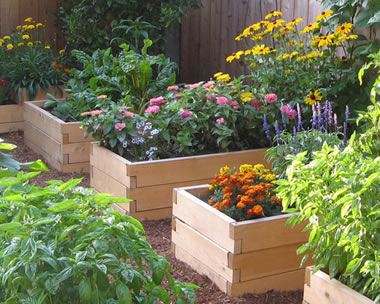 Raised Garden Bed: A Brown