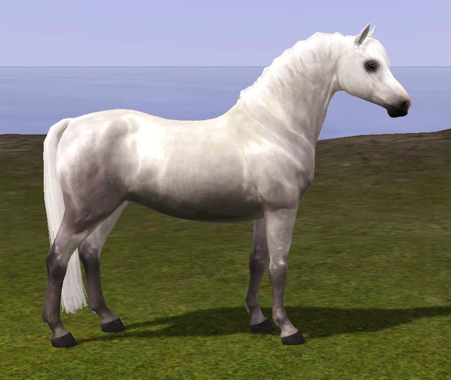 x tina sims equestrian welsh pony section b v 3. Black Bedroom Furniture Sets. Home Design Ideas
