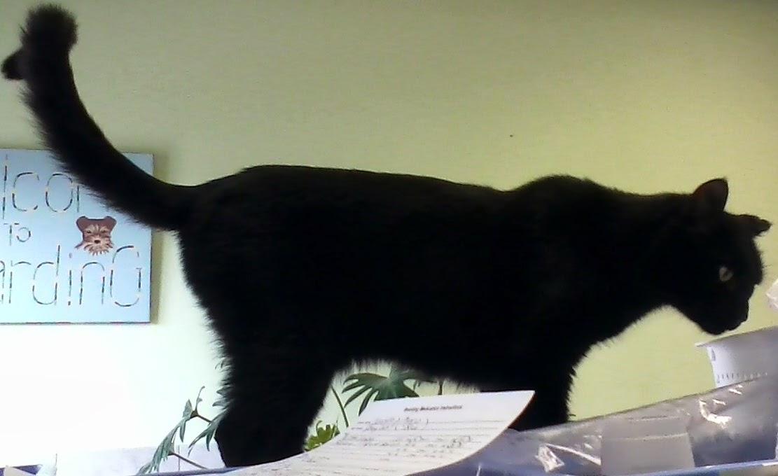 Old Black Cat Boo Stretch