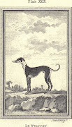 Le Whippet, Plate XXIX, 1790Andrew Bell 17261809. Le Whippet. Plate XXIX