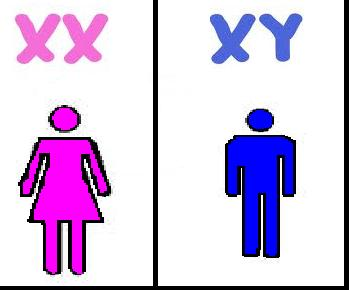 y chromosome  and Y chromosomes are