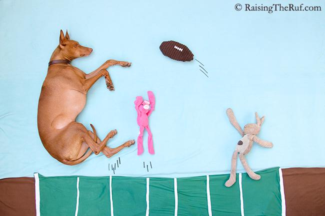 raisingtheruf dog football